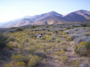 October 1, 2005 Chukar Scouting Trip In So. NV