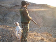 Late season Chukar